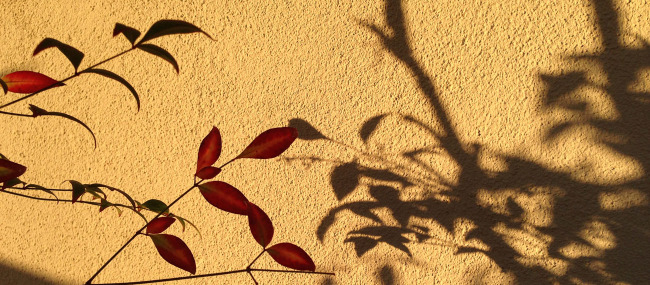 In your dance of life, is your shadow leading?